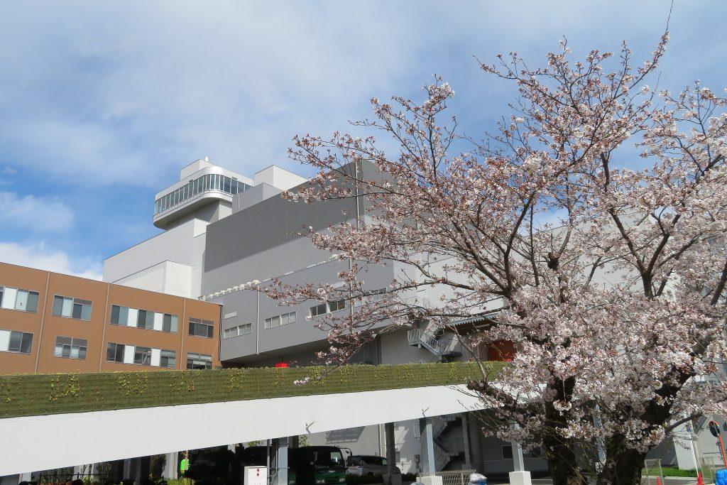 施設風景写真(桜)